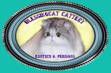 Blessingcat